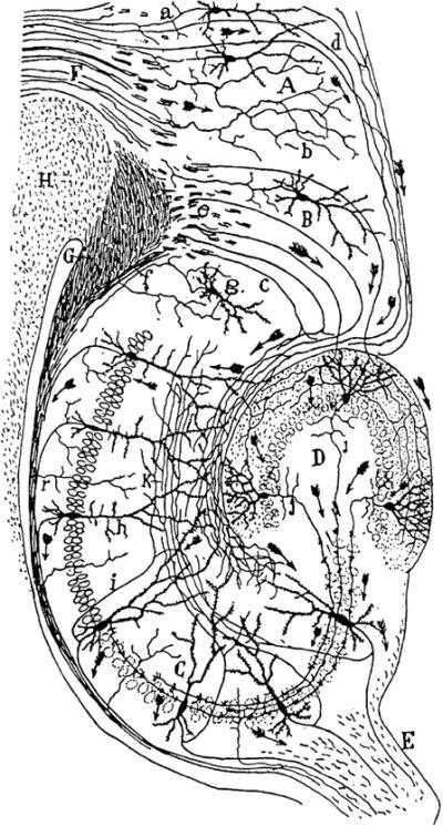 neural-circuitry